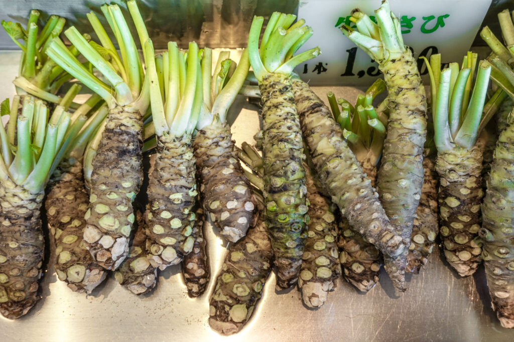 Freshly harvested rhizomes (the thickened stem) of the Wasabia Japonica plant. The leaves and roots have already been removed and the rhizomes are now ready to sell for grating into wasabi paste.